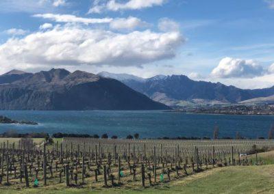 vignes en nouvelle zélande